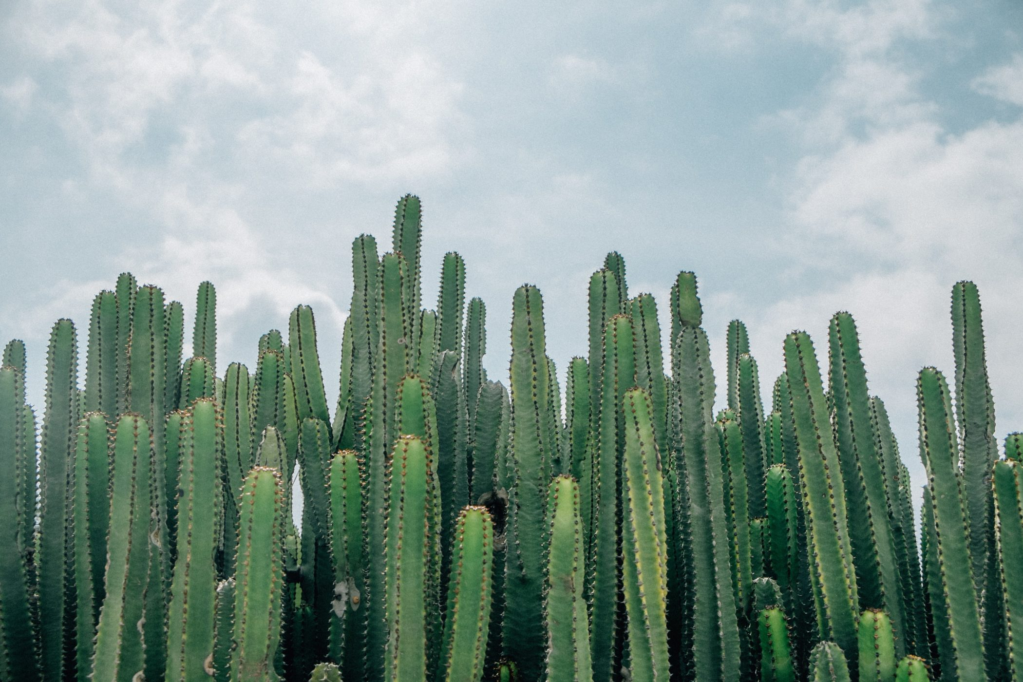 Cactus Spiritual Symbolism: Survive and Thrive: Healing Plants | Age